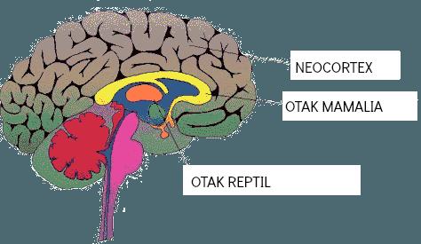 3-bag-otak